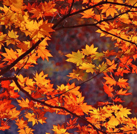 Fall Leaves Wallpapers New Outlooks Construction